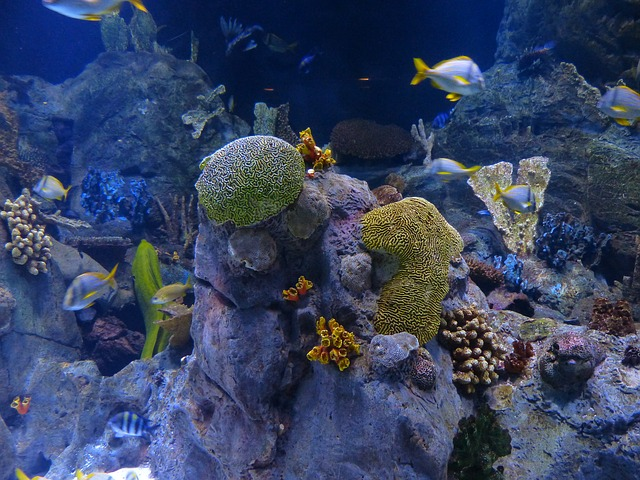 Unterwasseraufnahmen