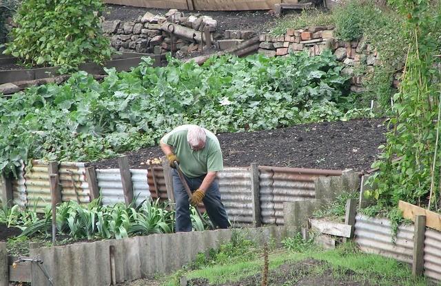 Gartenpflanzen richtig pflegen
