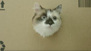 So schauen die Katzen bei Netto